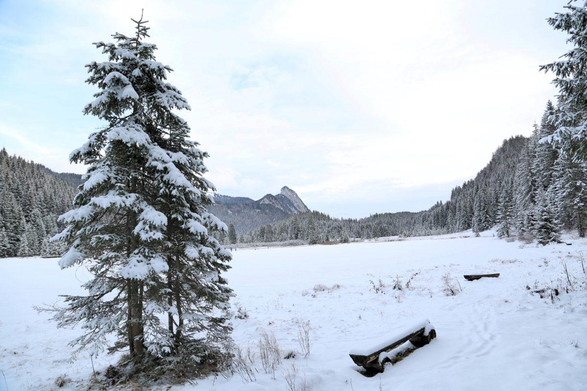 Landschaftsschutzgebiet: Spechtensee in Wörschachwald
