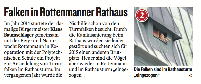 Kleine Zeitung: Falken in Rottenmanner Rathaus