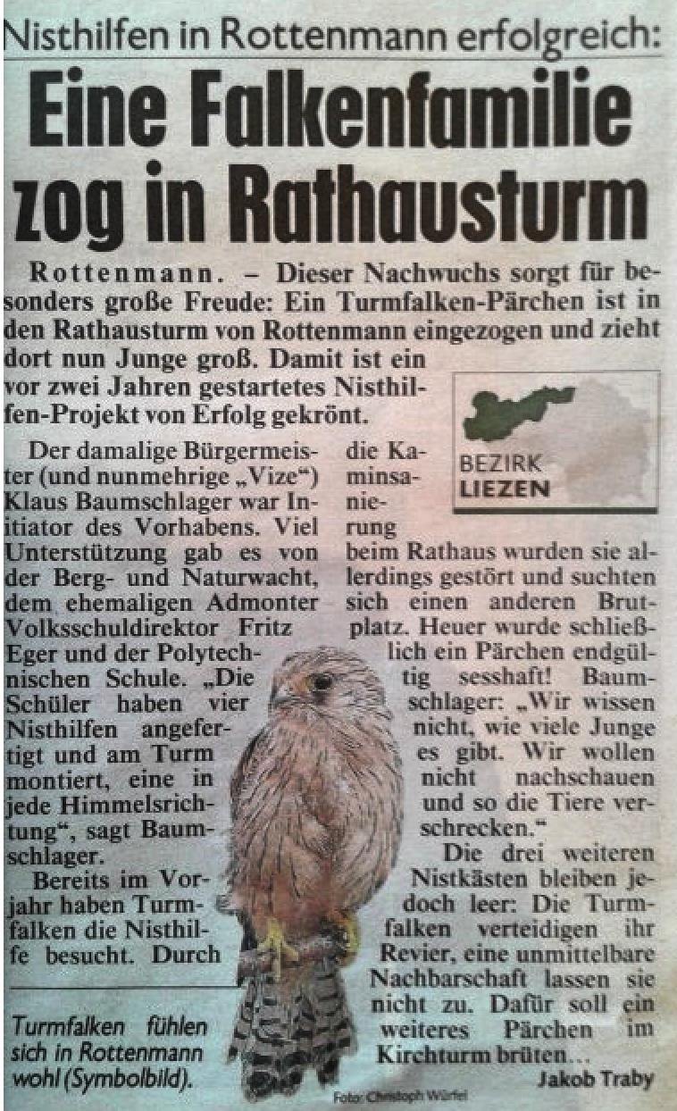 Kronen Zeitung: Eine Falkenfamilie zog in Rathausturm